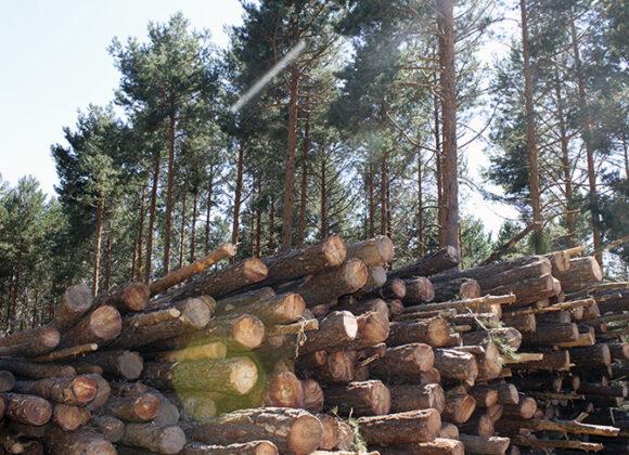 Boicho Forestal