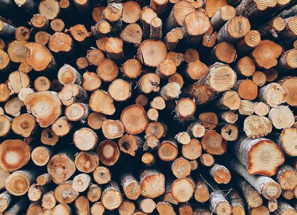 Cejus Trabajos Forestales
