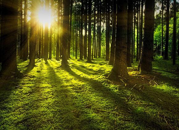 Ecuafor Servicios Forestales